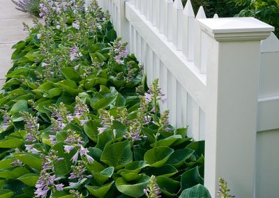 Fence plantings